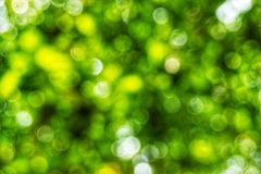 Abstact defocus bokeh light background made of forest style. Abstact defocus bokeh light background made of forest style,Beautiful background image Stock Photo