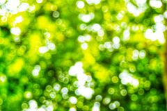 Abstact defocus bokeh light background made of forest style. Abstact defocus bokeh light background made of forest style,Beautiful background image Royalty Free Stock Photography