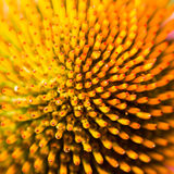 Abstact flower macro of a echinacea blossom. Background of an bstact flower macro of a echinacea blossom Stock Image