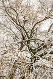 Abstact treetop with frosted branches royalty free stock image