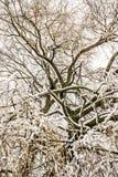 Abstact treetop med frostade filialer Royaltyfri Bild