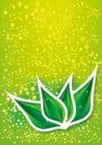 Abstact zielony liść royalty ilustracja