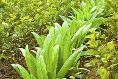 Abstand, der Technologie pflanzt: Kopfsalat und Jasmin stockbild