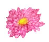 Abstaract桃红色菊花 库存图片