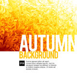 Abstarct autumn backgrounds. Orange autumn background. Eps8. RGB Global colors Royalty Free Stock Images