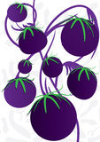 Abstarct Eggplant Space_eps. Illustration of abstract plant with eggplants, 3 kinds, background with pattern Royalty Free Stock Images