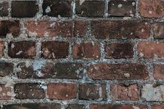 Abstarct grungebakgrund med tegelstenar Arkivfoton
