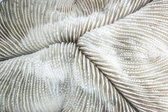 Abstarct modell av död korall Royaltyfri Bild