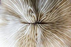 Abstarct modell av död korall Royaltyfri Fotografi