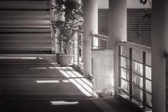 Abstarct svartvit bild av den genomskinliga inställningen för avfallfack på konkret golv bredvid vandringsledet Royaltyfri Foto