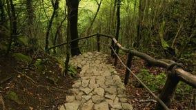 Absteigende Steintreppe im Gebirgswald, gefährliches Abenteuer in der Wildnis stock video footage