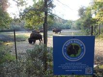 Abstimmungs-Bison für unser nationales Säugetier stockfotografie
