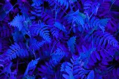 Abstração da cor de néon azul foto de stock royalty free