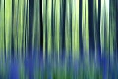 Abstração da floresta das campainhas Fotografia de Stock Royalty Free