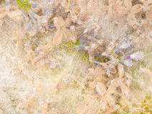 Abstração floral delicada Imagem de Stock