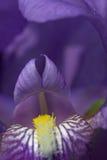 Abstracción 2. de la flor. fotos de archivo