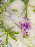 Abstracción orgánica vertical con los jacintos Fotos de archivo libres de regalías