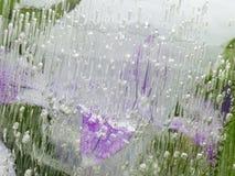Abstracción verde y de la lila orgánica frágil Imagen de archivo libre de regalías