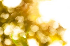 Abstrack Bokeh nature view of Golden yellow leaf in garden at winter under sunlight. Natural Golden yellow using as a background