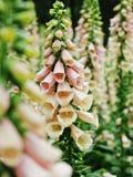 Abstrack del cierre encima de la flor blanca Fotos de archivo libres de regalías