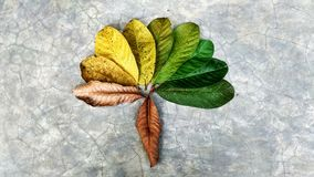 Abstrack Leaf in gradient color. Abstrack beatifull leaf in gradient color Royalty Free Stock Photo