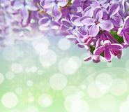 Abstrackt background with with lilacs for greetings Happy Valent Stock Photography
