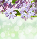 Abstrackt background with with lilacs for greetings Happy Valent Royalty Free Stock Photo