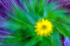 Abstracção amarela da flor Fotos de Stock