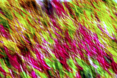 Abstract. An exaggerated shot of a field of flowers Royalty Free Stock Photos