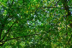 Abstract aard weelderig groen bos als achtergrond Stock Foto