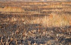 Abstract achtergrond gebrand gras Stock Afbeeldingen