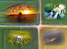Abstract agricultural collage Stock Image