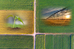 Abstract agricultural collage Stock Photography