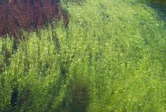 Abstract algae Stock Image