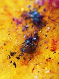 Abstract amber background with splash and circle Stock Photography