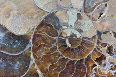 Abstract ammonite fossil close-up. Abstract ammonite fossil macro close-up swirl pattern faceted multi-coloured Stock Photo
