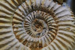 Abstract amonite fossil background Stock Photos