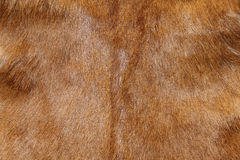 Abstract animal fur texture Royalty Free Stock Images