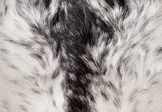 Abstract animal fur texture Stock Images