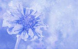Abstract antiek beeld van een bloem van Zinnia Stock Foto's