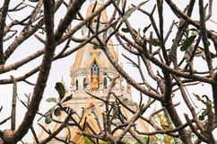 Abstract architecture Sothon wararam worawihan temple. And dry tree Vintage Style Stock Images