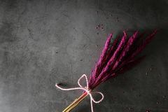 Pink dried glass bouquet on cement background Stock Photo