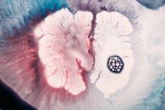Abstract artistiek beeld van kleurrijke plons Royalty-vrije Stock Foto