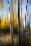 Abstract Aspen Trees Stock Photos