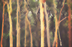 Abstract Australian misty Eucalyptus forest background. Abstract Australian Eucalyptus and Angophora forest background. Digital illustration, soft blur Stock Image
