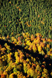 Abstract autum forest pattern Royalty Free Stock Photo