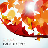 Abstract autumn  background. Various tree leaves falling down in the wind in front of the glaring sun Stock Photography