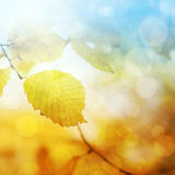 Abstract autumn background Stock Images