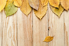 Abstract Autumn background Royalty Free Stock Images