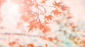 Free Abstract  Autumn Background Stock Photos - 46574843